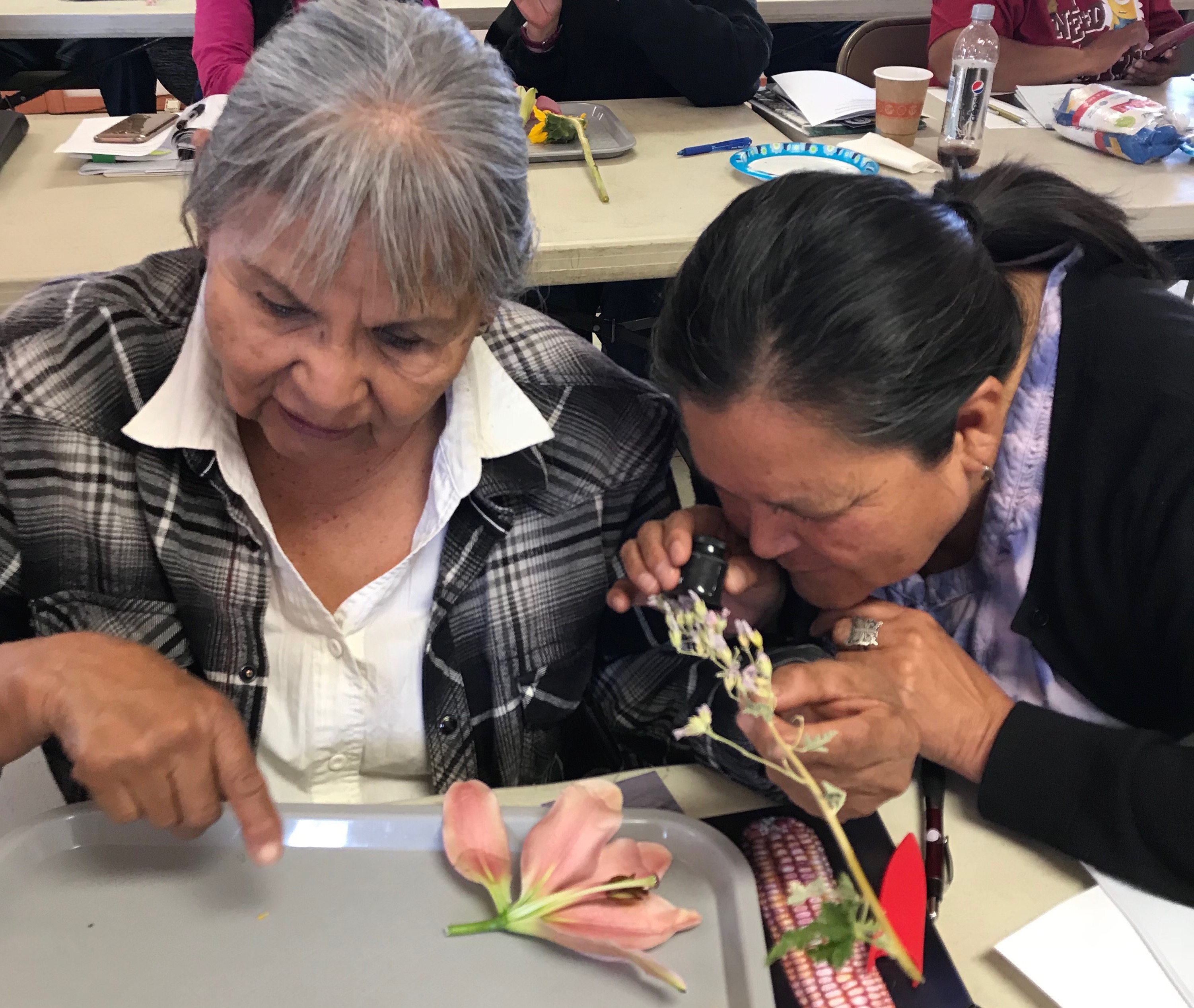 Seed Keeper Workshop at Hopi: Flower Anatomy Exploration
