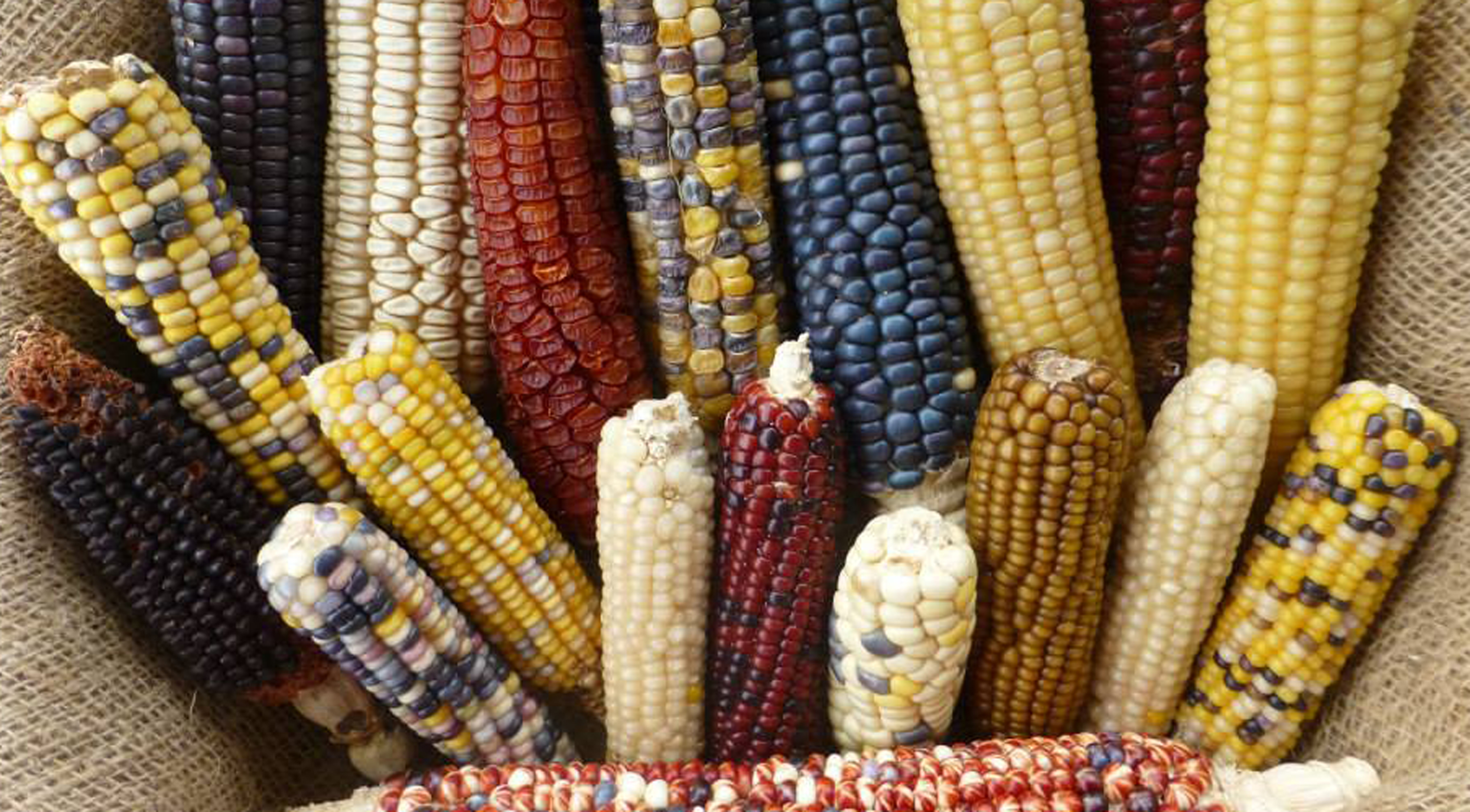 Adaptation of Ancient Maize to High Elevations of North America